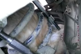 Video: Cat Gets Stuck In Coil Spring Of SUV, And Goes For a Ride
